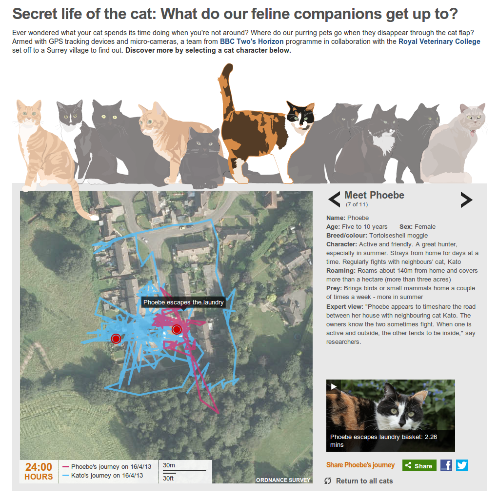 Secret life of the cat: What do our feline companions get up to?